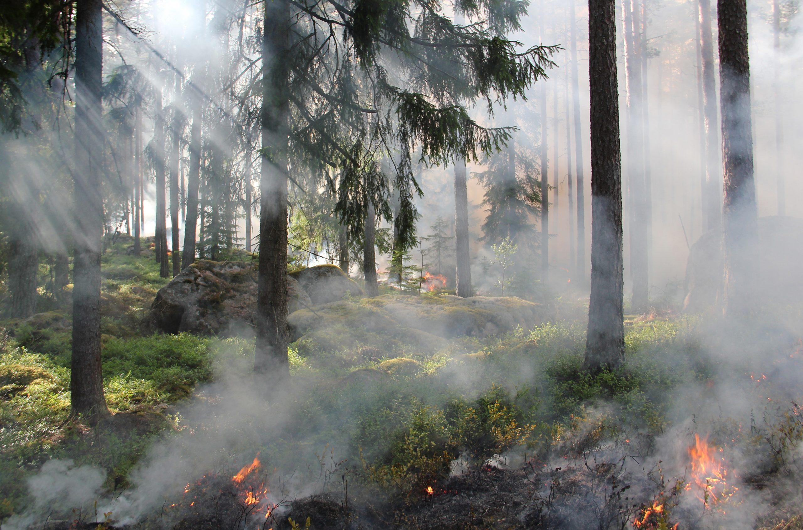Es brennt im Wald